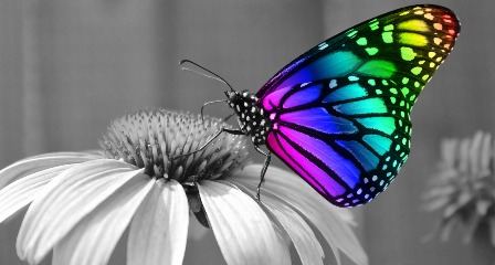 Butterfly Symbolising the Many Colours of Personality